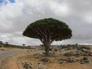 7O2A Остров Сокотра Йемен