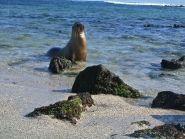 HC8ART Isabela Island