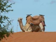 CN2CL Morocco
