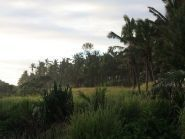 A35UO Tonga