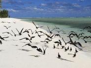 3B9HA Rodrigues Island