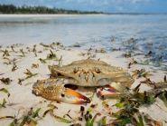 5H1ES Zanzibar Island