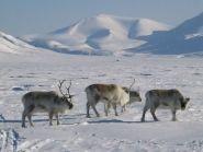 JW/M1ACB Spitsbergen Archipelago