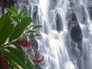 V6AAA V6WW Pohnpei Island
