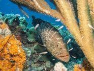 PJ4/AI5P Bonaire Island