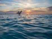 PJ2/AI5P Curacao Island