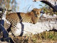 9J2JOCV Zambia