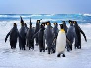 VP8IDX VP8IDX/MM Falkland Islands