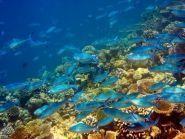 3B8/DJ7RJ Mauritius Island