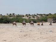 TT8AMO Чад