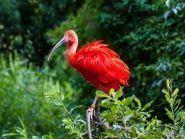 PZ5W Suriname