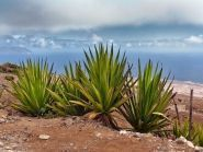 D4F Sao Vicente Island Cabo Verde