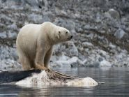 JW7VRA Spitsbergen Island Svalbard