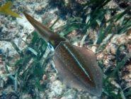 V25LK Antigua Island