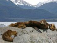 3G9JA Hornos Island Tierra del Fuego Archipelago