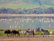 5H2SF Tanzania