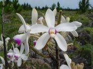 FK/F9IE New Caledonia Island