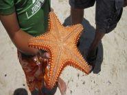 V29RW Antigua Island