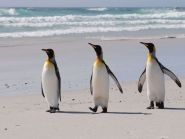 VP8KVA Falkland Islands