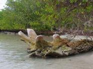 TO972M Martinique Island