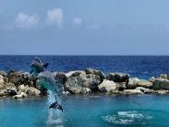 PJ2/VA7AM Curacao Island