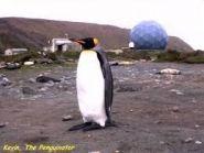 Nick Allen Pinguinator
