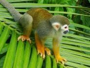 PZ5V Suriname