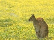 VK5GR/P Kangaroo Island