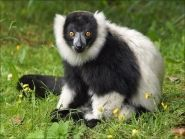 5R8UP Мадагаскар