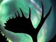 XK150YUKON CI1AAA VY1AAA Yukon
