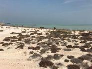 A70X Остров Аль Сафлая