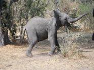 A25AL Ботсвана