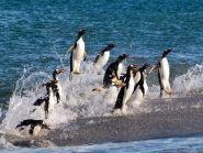 VP8VPC Falkland Islands