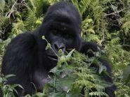 9X0TA Rwanda