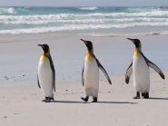 VP8JLL Falkland Islands