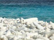 PJ4/NN5E PJ4/NT5V Bonaire Island