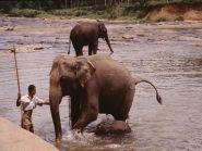 4S7TNG Шри Ланка