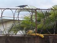 9Z4/DL9OBQ Saint Augustine Trinidad Island