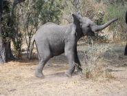 A25VR Botswana