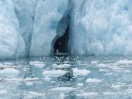 JW100PUT Spitsbergen