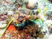 PJ5/KG9N Sint Eustatius Island
