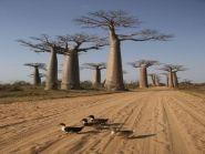 5R8UO Madagascar