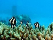 AH0BT Остров Сайпан WW SSB 2009