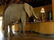 9J3A Zambia 2009