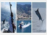 CT9/DF7ZS CQ3W Madeira Island