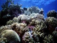 E51COF South Cook Islands