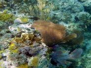 C6APG Багамские острова