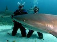 C6ABB Остров Нью Провиденс Нассау Багамские острова