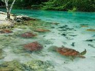TX4T Остров Таити