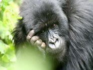 9X0CW 9X0LX Rwanda